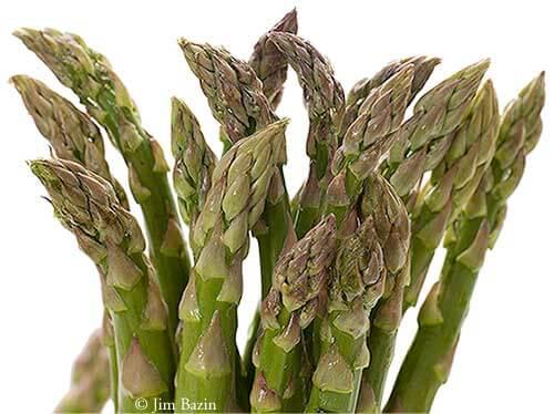 Asparagus3792_3
